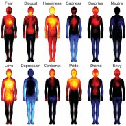 Where Do You Feel That Emotion In Your Body?